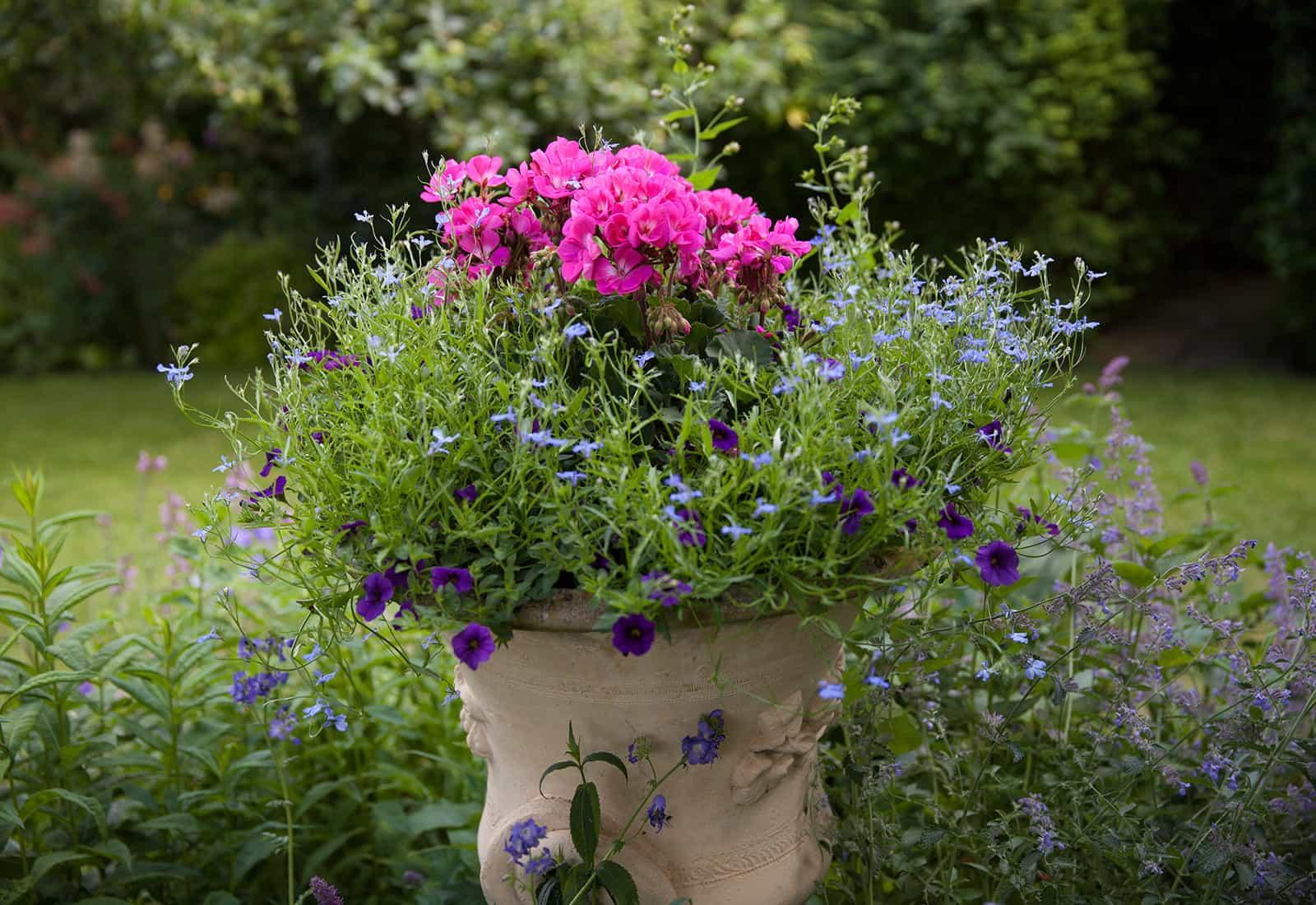 Another garden in Spaldwick