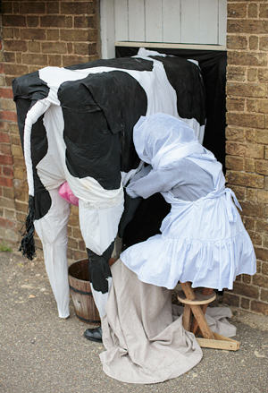 Cow and maid