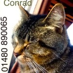 Conrad the Cat is Missing