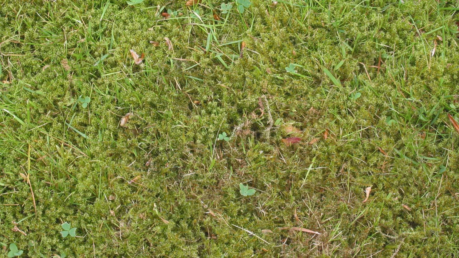 Poor lawn