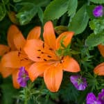 Gardening News For March 2014