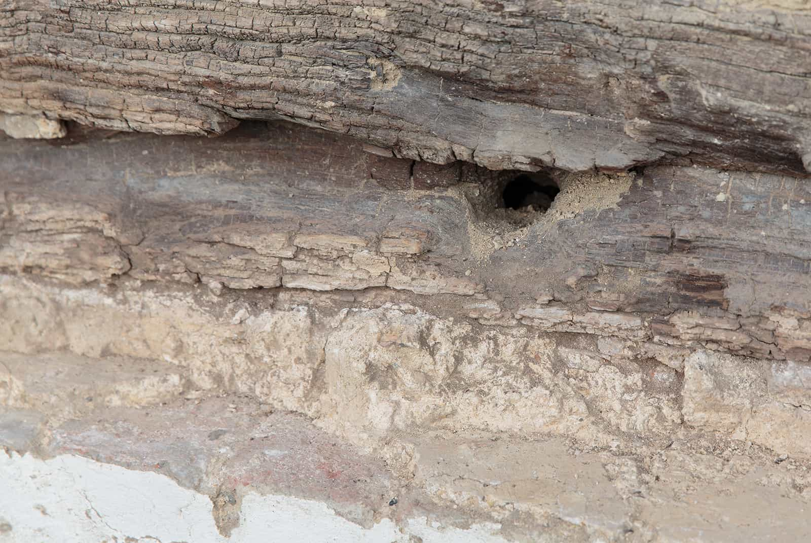 Damage in wood