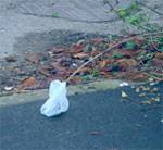 White bag plague